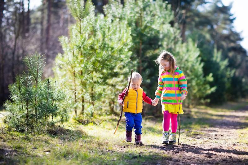 children walking hand in hand in forest