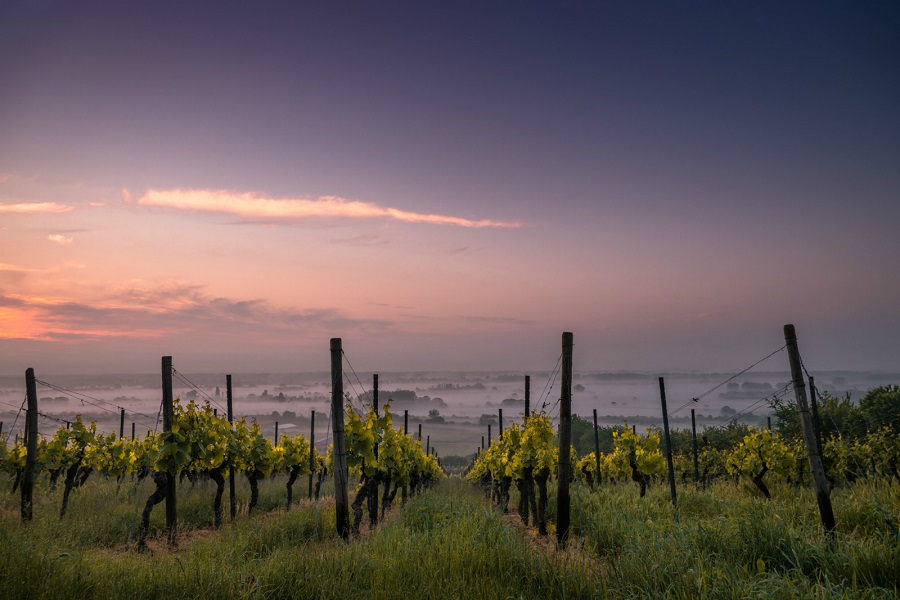 Surprising International Wine Destinations: 17 Wineries Off The Beaten Path